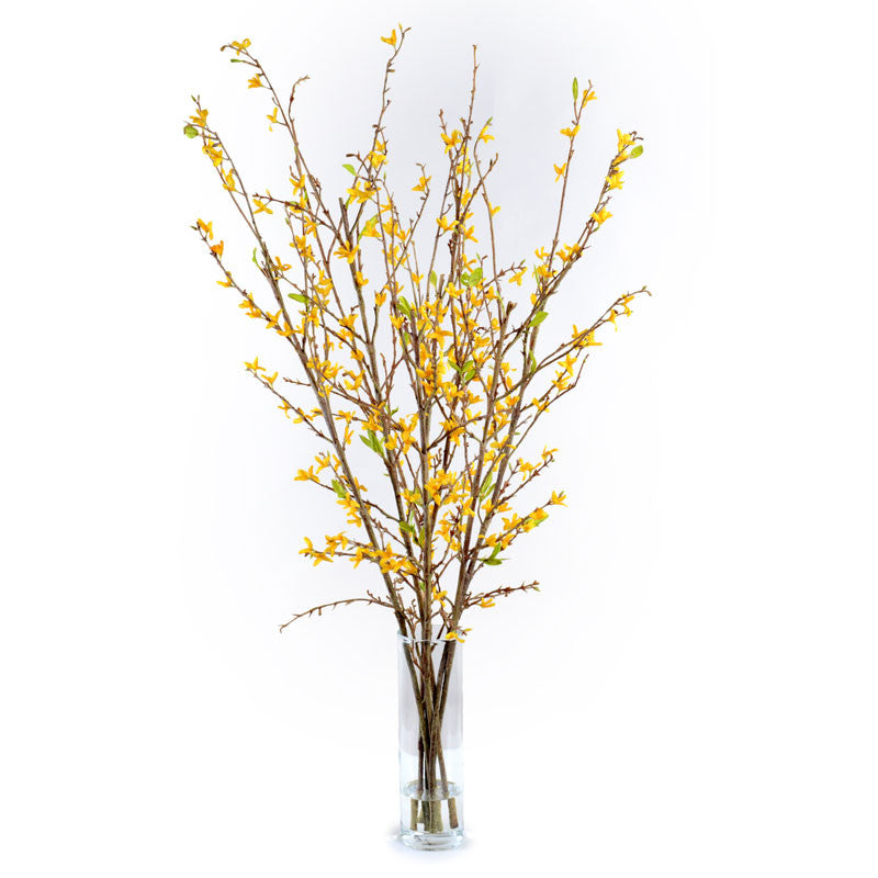 Forsythia Arrangement - New Growth Designs