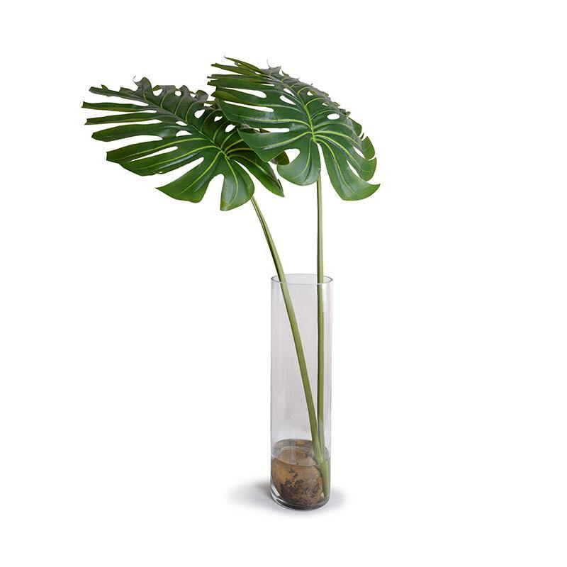 Large Monstera Branches in Glass Cylinder
