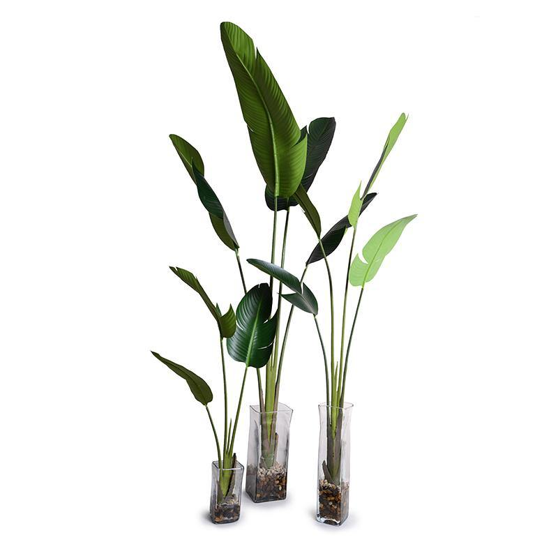 Bird of Paradise (Stretlitzia) - New Growth Designs