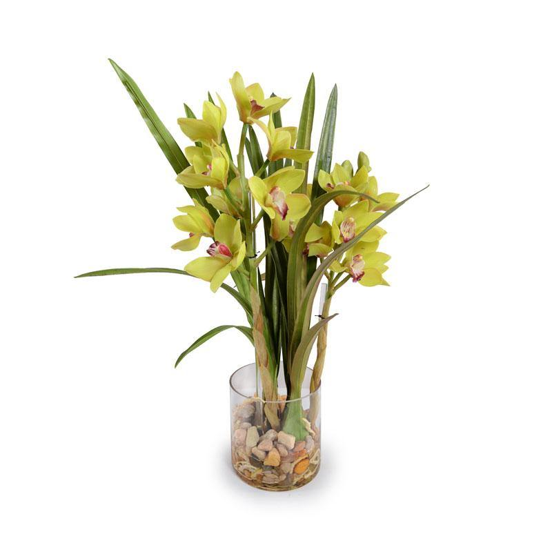 Cymbidium Orchid - Green ...