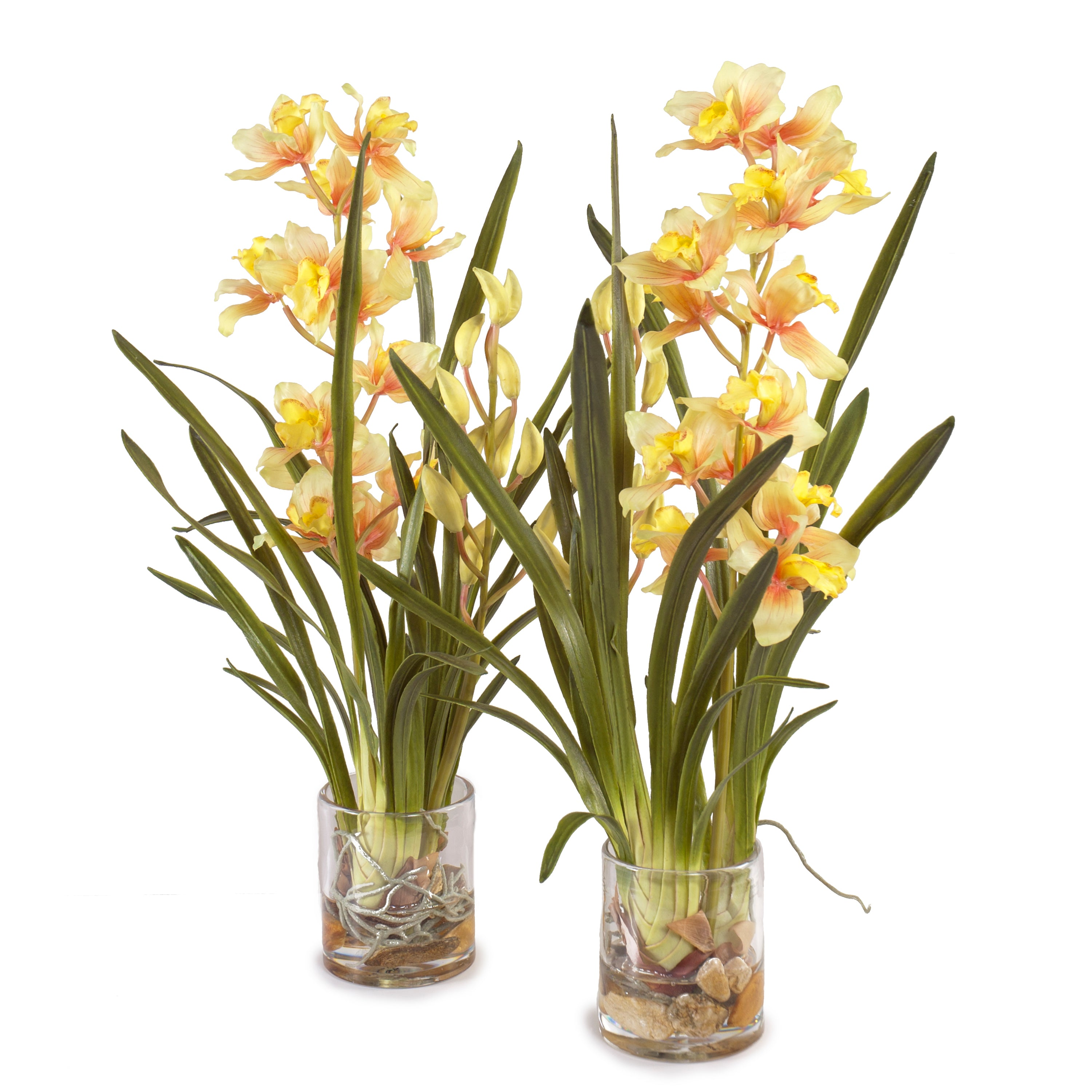 Cymbidium Orchid in Glass - Yellow