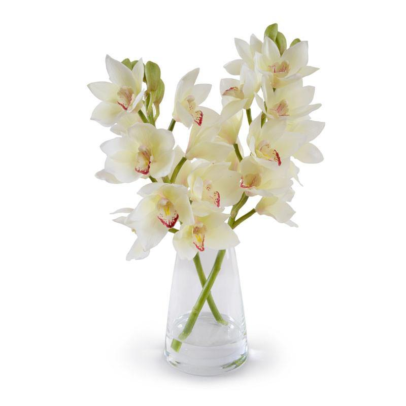 Cymbidium Orchid Arrangement - New Growth Designs