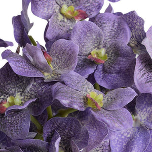 Vanda Orchids in Glass - Purple - New Growth Designs