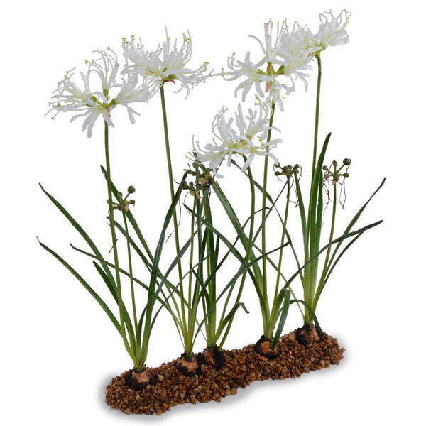 Nerine Lily Flowerscapes
