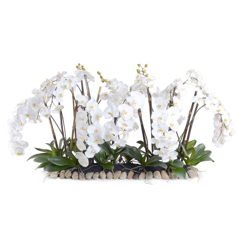Phalaenopsis Orchid Flowerscape w/Rock Base - White