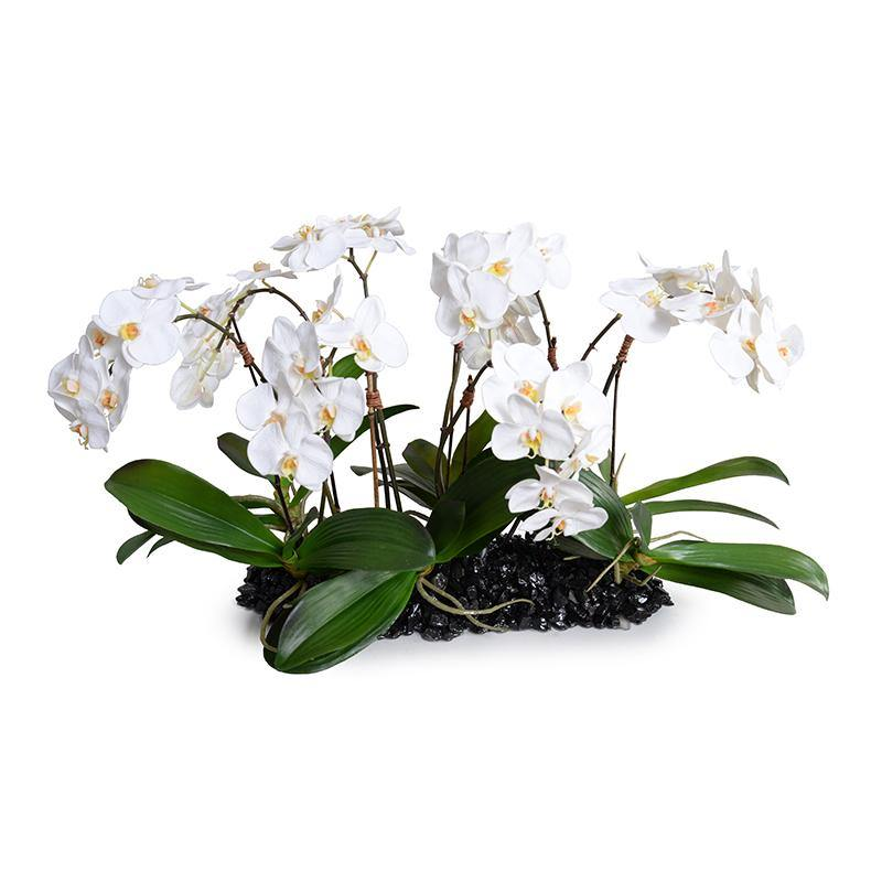 Phalaenopsis Orchid Flowerscape - White - New Growth Designs