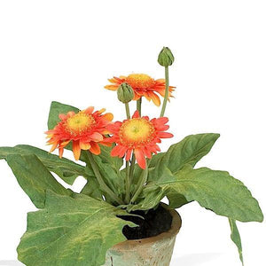 Gerbera Daisy - New Growth Designs