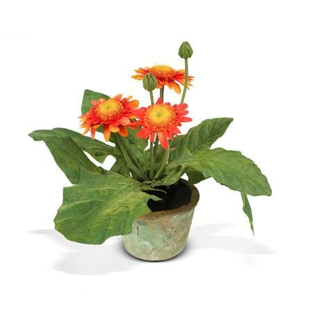 Gerbera Daisy - Orange - New Growth Designs