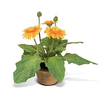 Gerbera Daisy - Gold - New Growth Designs