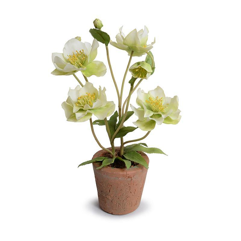 Hellebore (Lenten Rose) - New Growth Designs