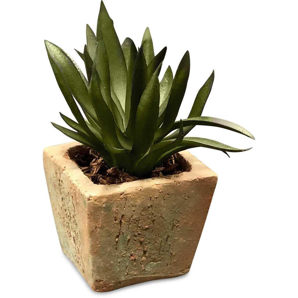 Succulent - Agave in clay pot