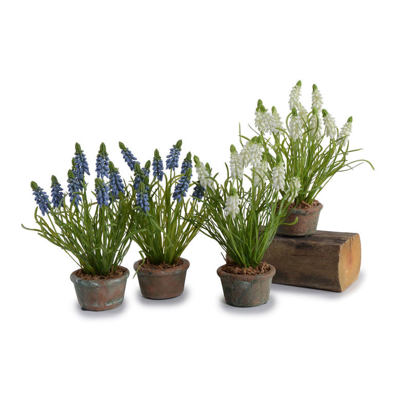 Grape Hyacinth - New Growth Designs
