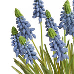 Grape Hyacinth in Terracotta Dish - Blue - New Growth Designs