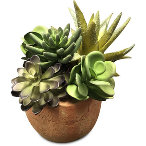 Succulents - Mixed in clay pot