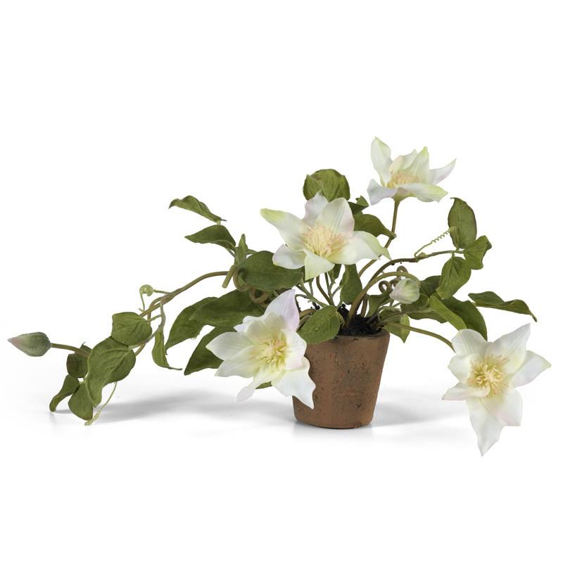Clematis in Terracotta - White