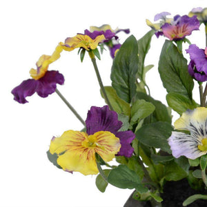 Johnny Jump Up (Viola) - New Growth Designs