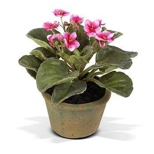 African Violet - Fuchsia
