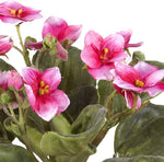 African Violet - Fuchsia - New Growth Designs