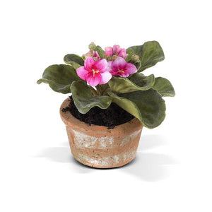 African Violet - New Growth Designs