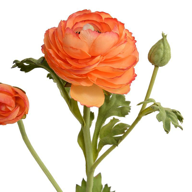 Ranunculus Mini Pot - Orange