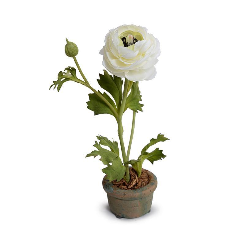 Ranunculus Mini Pot - White
