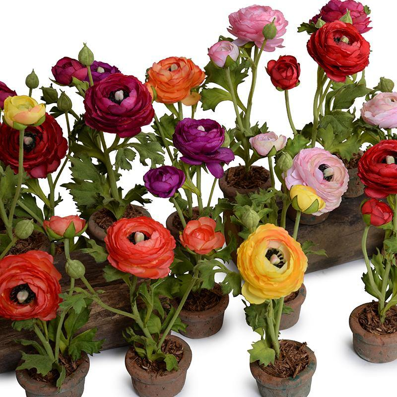 Ranunculus Mini Pot - Red-Orange