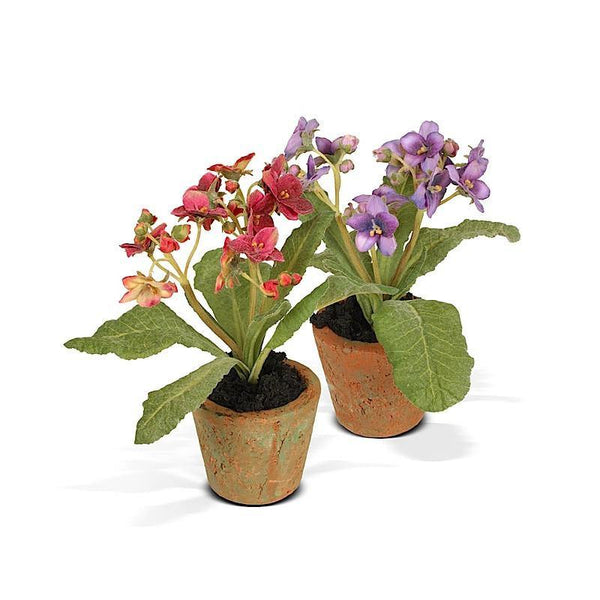 Aricula Mini Pot - New Growth Designs