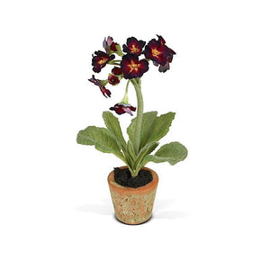 Mini-Pot - Primula