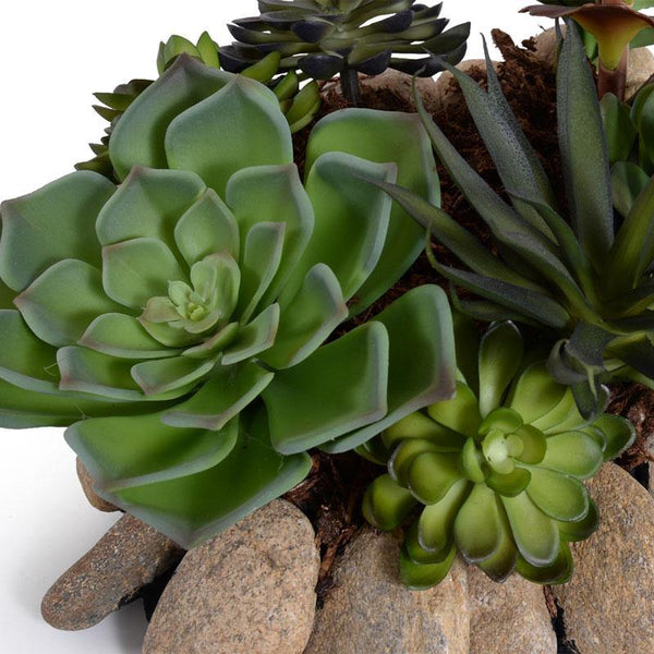 Succulents Rock Garden