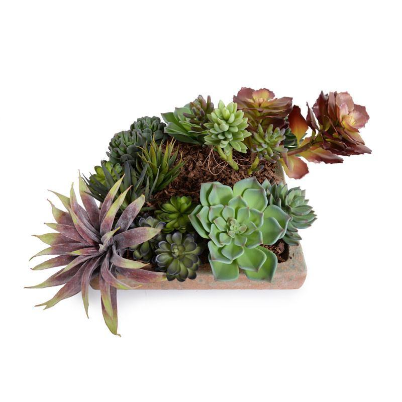 Succulents Garden - New Growth Designs