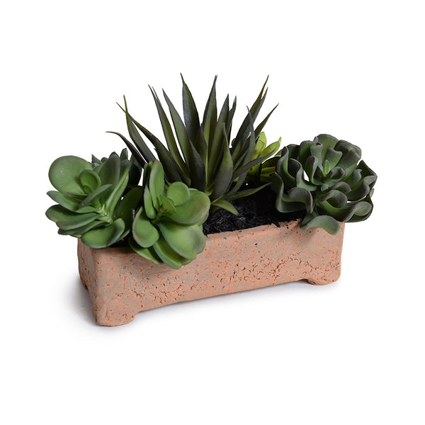 "Succulents in 8"" Planter"
