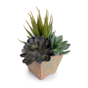 Succulents in Square Pot