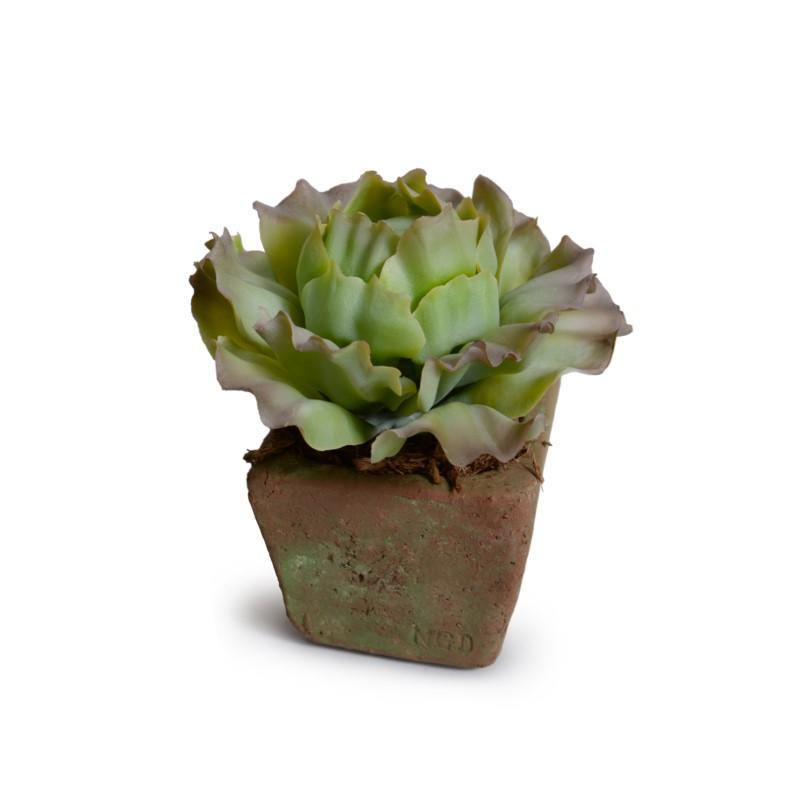 Cabbage Succulent in Rustic Terracotta Cube - Green Brown - New Growth Designs