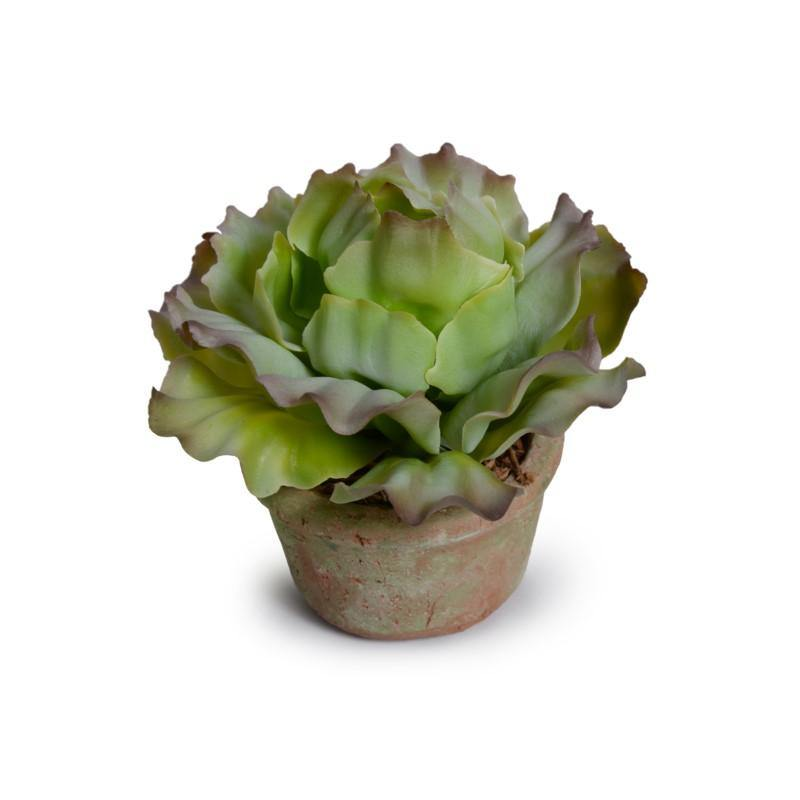 Cabbage Succulent in Rustic Terracotta Pot - Green Brown - New Growth Designs