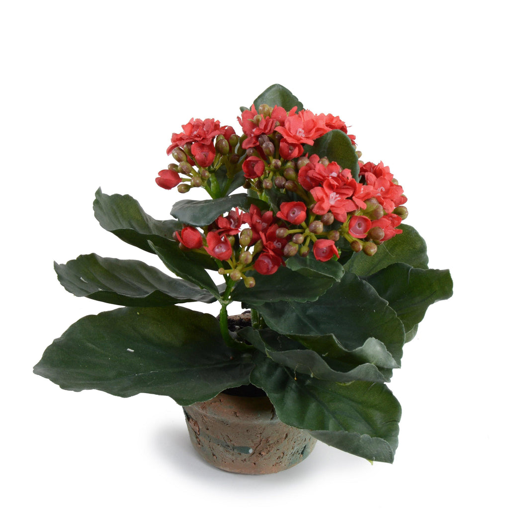 Kalanchoe (Small) - Red