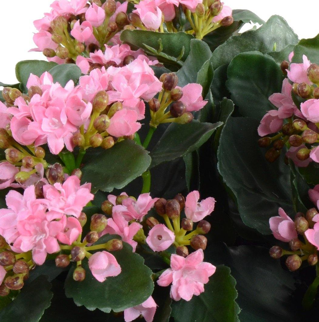 Kalanchoe Plant - Pink - New Growth Designs