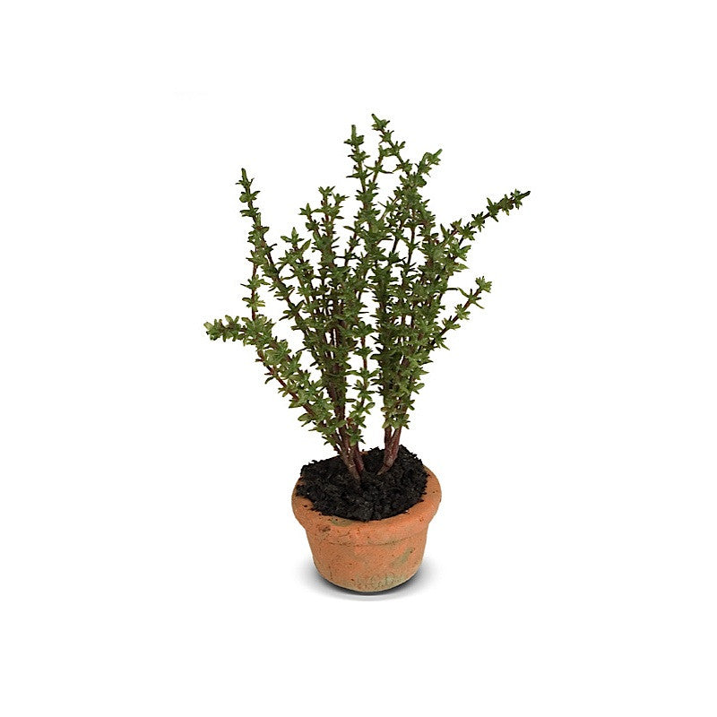 Herb - Thyme mini pot - New Growth Designs