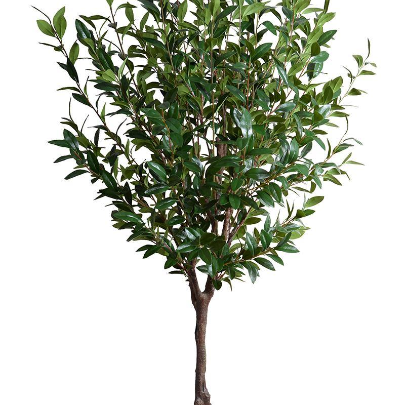Camellia tree, 8' - New Growth Designs