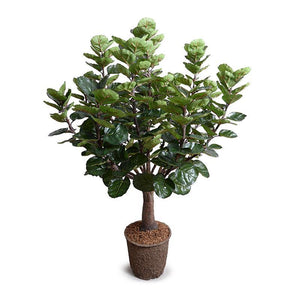 Aralia Balfouriana Tree, 5' - New Growth Designs