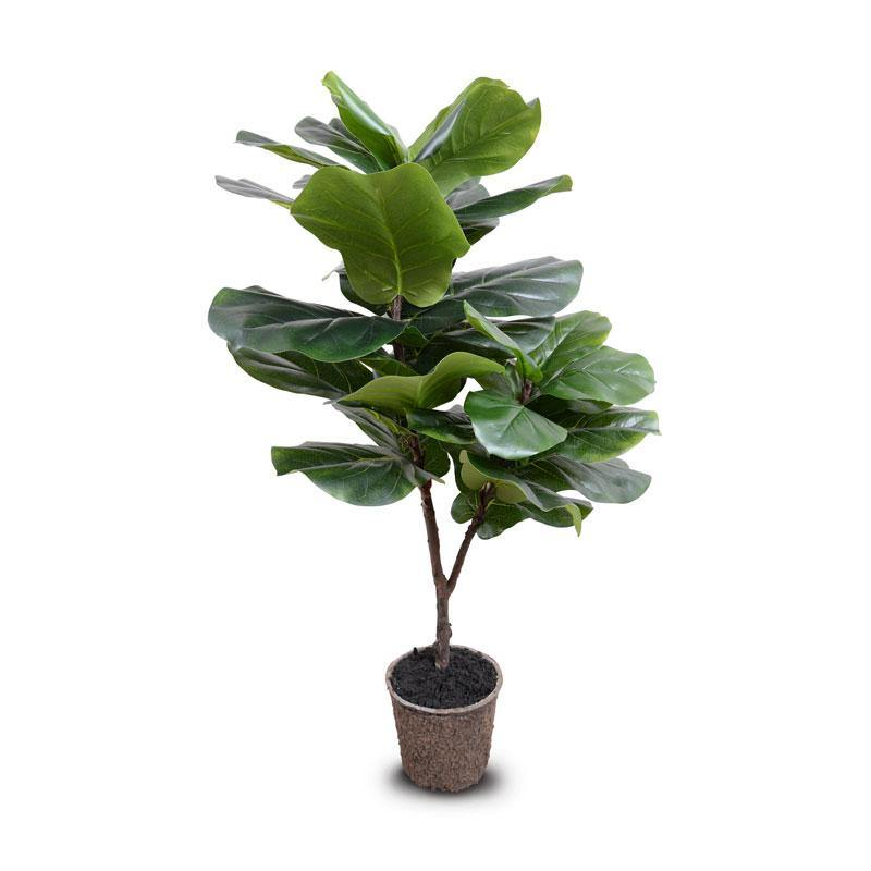 "Fiddle-leaf Fig Tree, 45""H - New Growth Designs"