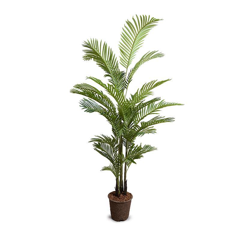 Areca Palm Tree, 6'