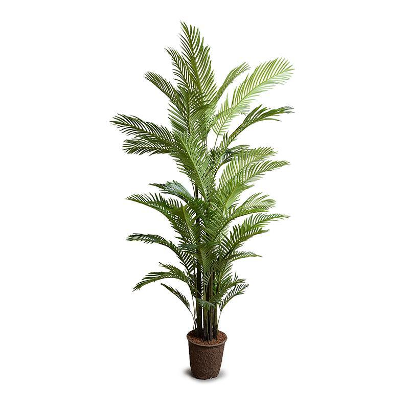 Areca Palm Tree, 8'