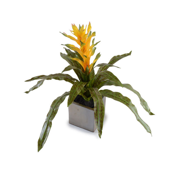 Bromeliad Arrangement - New Growth Designs