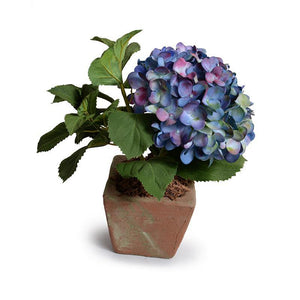 Hydrangea Cutting in Terracotta - Blue