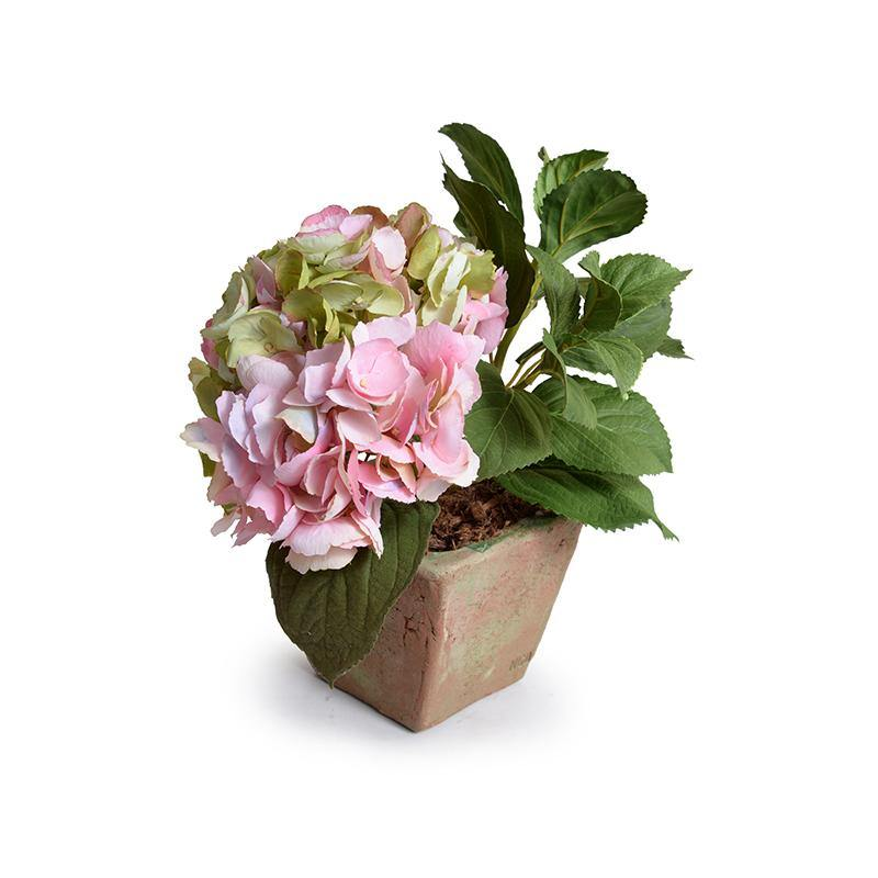 Hydrangea Cutting in Terracotta - Pink-Green