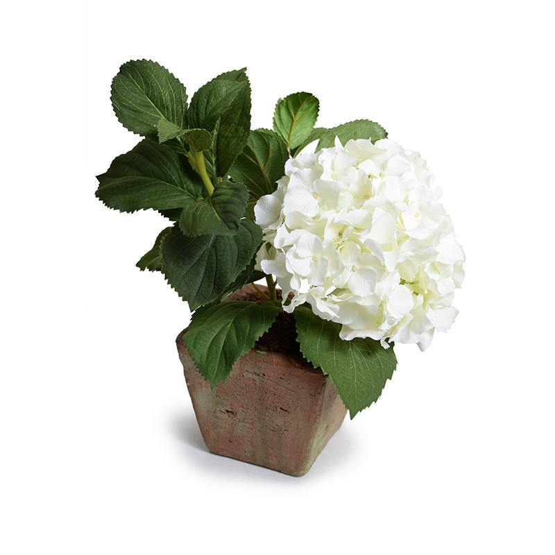 Hydrangea Cutting in Terracotta - White