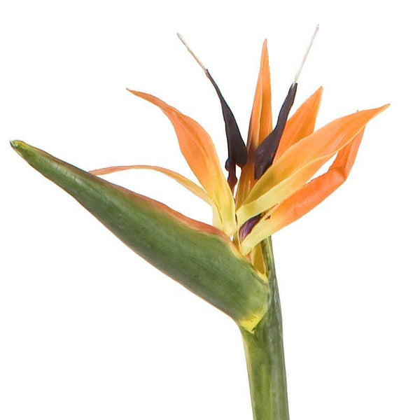 Bird of Paradise - New Growth Designs