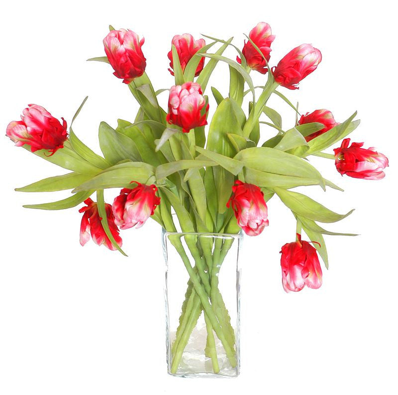 Tulip Stem, Red-white