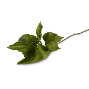 Hydrangea Leaf Stem - New Growth Designs