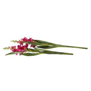 Gladiolus Flower Stem - New Growth Designs